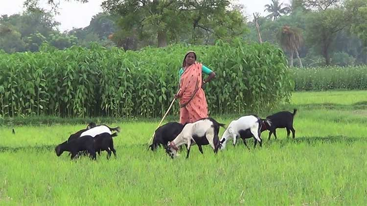 গ্রাম-বাংলার চিরায়ত রুপ